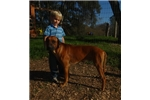 Picture of African beauty! AKC microchipped male