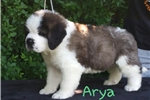 Picture of Ch ped Arya