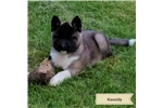 Picture of AKC Champion Sired Female