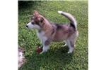 Picture of Ureena