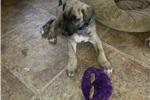 Picture of Yogi