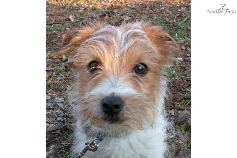 Small Dog Rescue Michigan