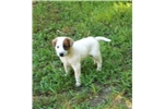 Picture of Kizmic SEE Video Red Heeler
