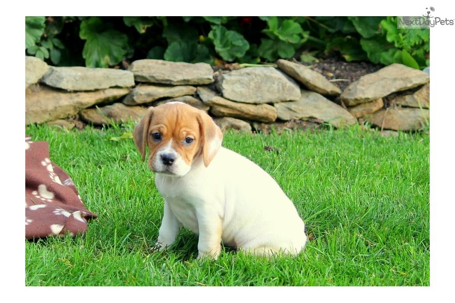 advanced pet care sparks pets world