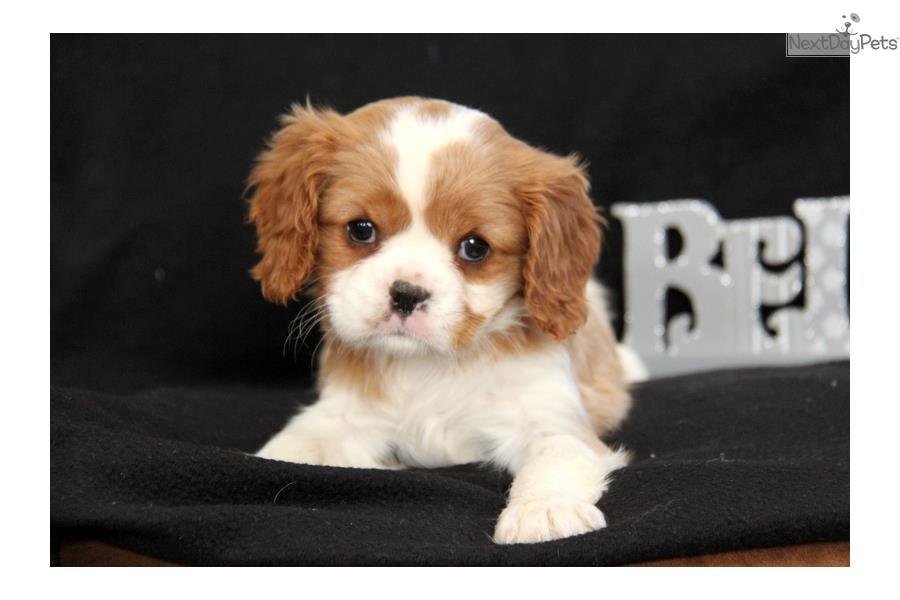 Roxy Dog Breed