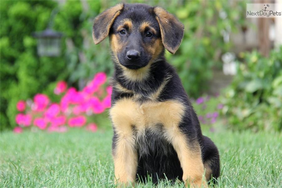 Professional Dog Training Tips amp Advice