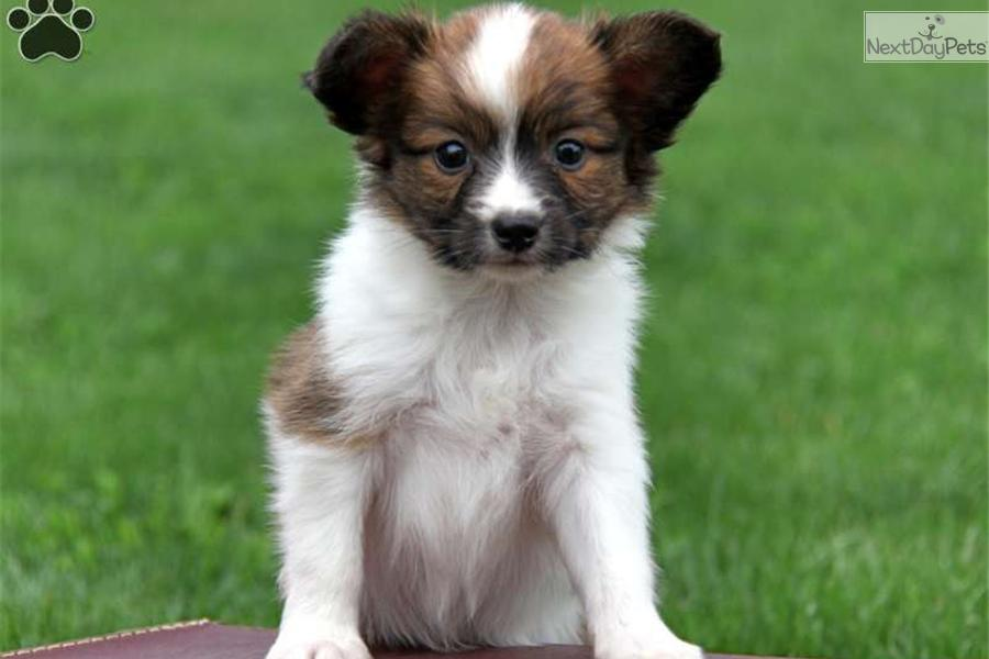 how to buy a puppy online safely