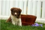Picture of Laura / Border Collie