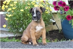 Picture of Sonny / Boxer