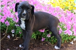 Picture of Haven / Boxer
