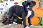 Picture of Mercedes / Boxer