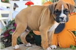 Picture of Moon / Boxer