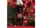 Picture of Flora / Boxer