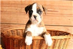 Picture of Beauty / Boxer
