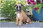 Picture of Simon / Boxer