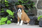 Picture of Leanne / Boxer