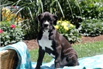 Picture of Arwin / Boxer