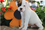 Picture of Match / Boxer