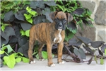 Picture of Lonnie / Boxer