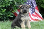 Picture of Independence / German Shepherd