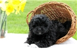 Picture of Nate / Lhasa-poo