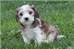 Picture of a Mixed/Other Puppy