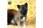 Picture of Emily / Pomsky