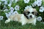 Picture of Benson / Havashu