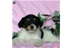 Hunt Terrier for sale