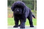 Picture of Ned / Newfoundland