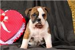 Picture of Ritchey / Olde English Bulldogge