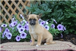 Picture of Lilly / Pomchi