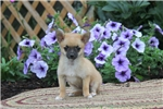 Picture of Lucy / Pomchi