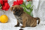 Picture of Giles / Puggle