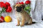 Picture of Glynn / Puggle