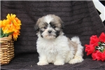 Picture of Reed / Shichon
