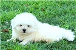 Picture of Gage / Shichon