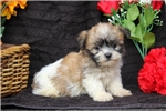 Picture of Ronny / Shichon