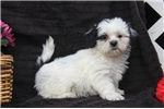 Picture of Ranger / Shichon