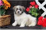 Picture of Randy / Shichon