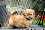 Picture of Kandy / Shih-poo