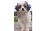 Picture of TARA - RESCUE PUPPY - ISN'T SHE GORGEOUS!!!