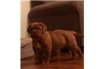 Picture of M&M Bordeaux Male Red