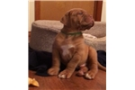 Picture of M&M Bordeaux Male green