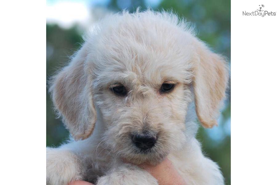Photos Names Of Dog Breeds Small Non Shedding Dog Breeds ...
