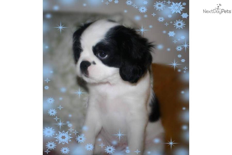 Puppy training 9 weeks ultrasound