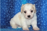 Shichon for sale