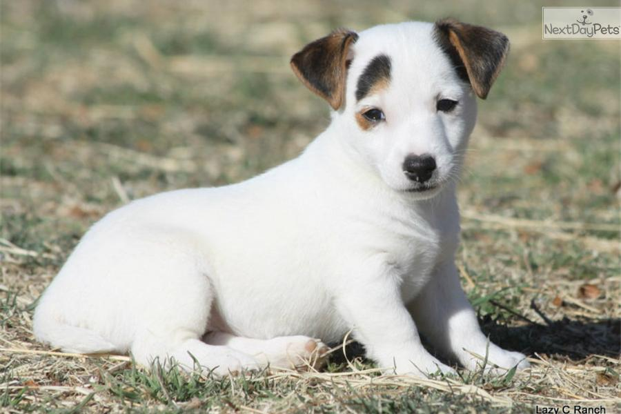 Dogs For Sale Near Harper Texas