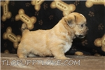Picture of Oakley Male CKC Shorkie Discounted Now $750
