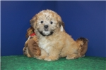 Picture of Oakley Discounted now $750 Sweetest Baby Boy Ever!
